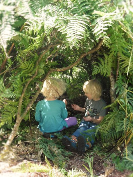 FairyForestSchool